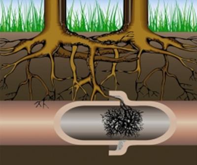 Verstopt riool door boomwortels